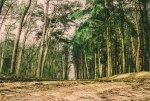 Wilderness Theme