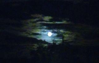 Full Moon FL
