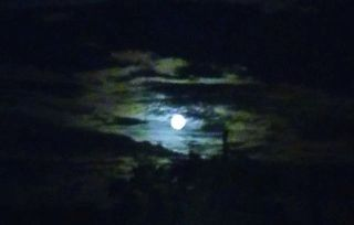 Full Moon FL